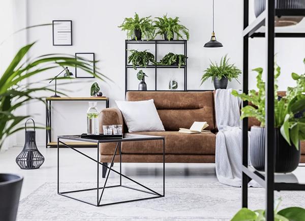 : Astuces pour se sentir bien chez soi : Placer de nombreuses plantes vertes en pot disposées sur des étagères dans un salon.
